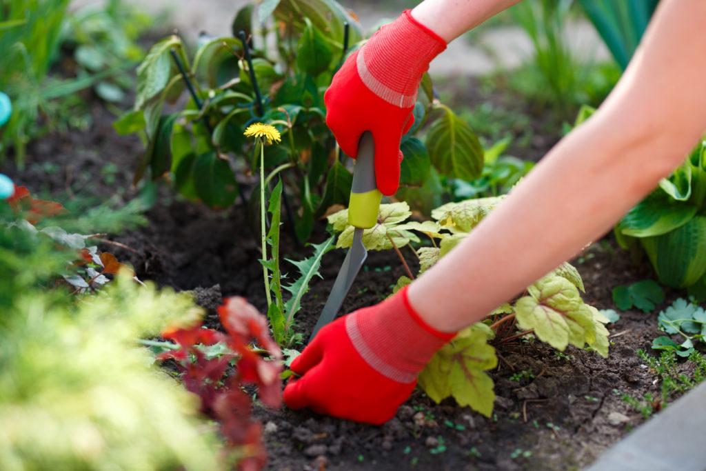 Spring Weeds Removing