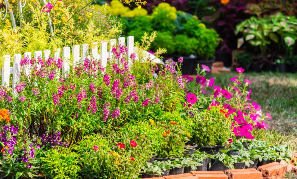 Garden Texture 1024x618