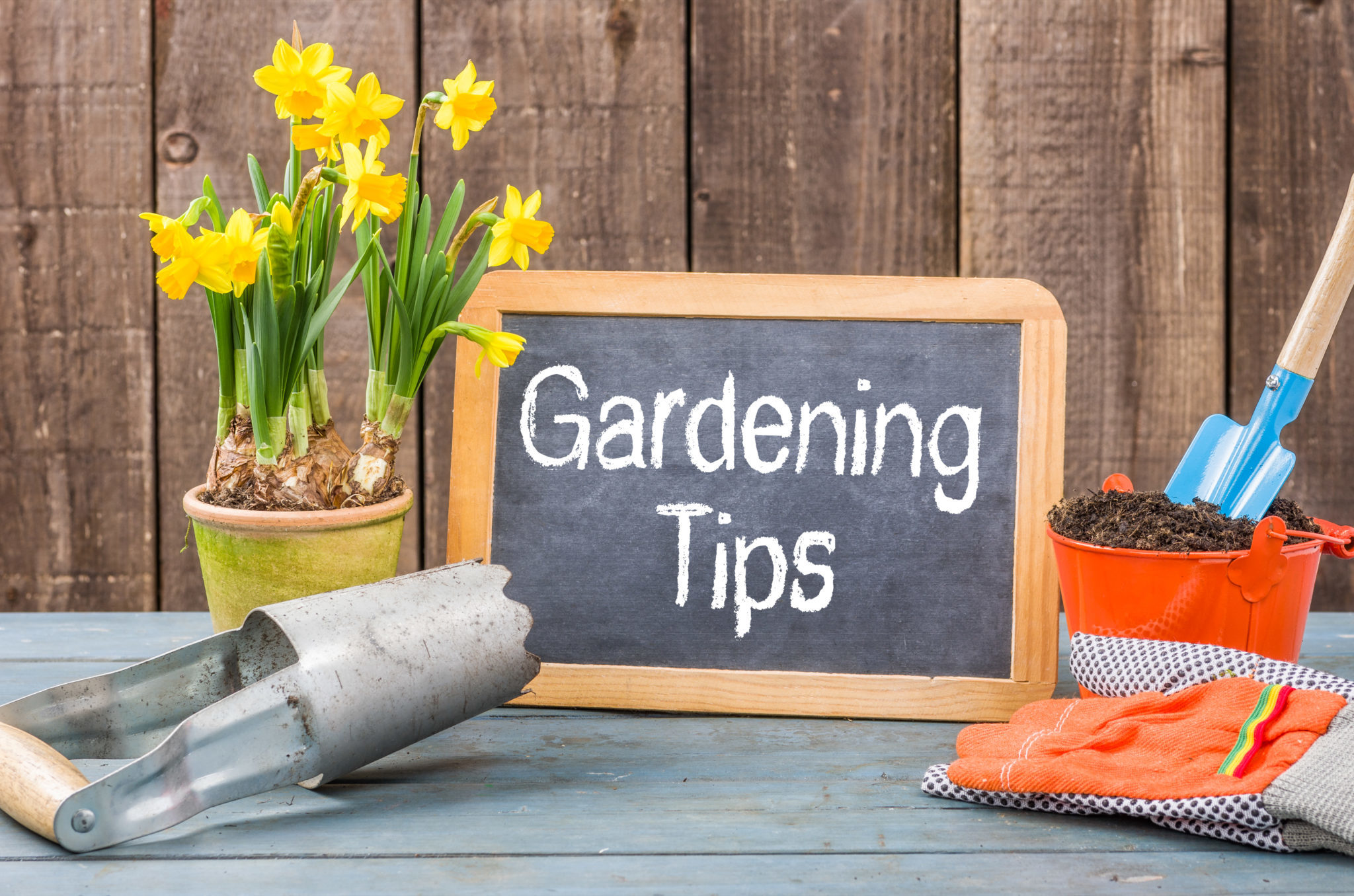 revampo.ca/gardening tips and ideas